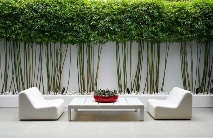 Fascinating Evergreen Pleached Trees for Outdoor Landscaping 61
