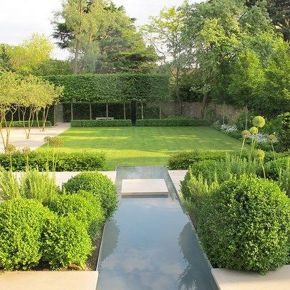 Fascinating Evergreen Pleached Trees for Outdoor Landscaping 70
