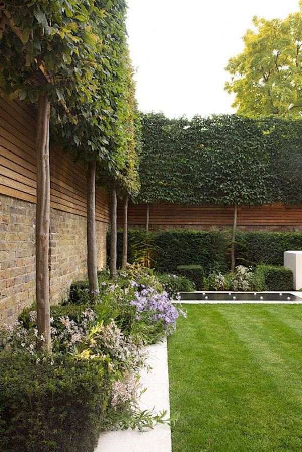 fascinating evergreen pleached