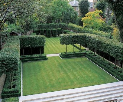Fascinating Evergreen Pleached Trees for Outdoor Landscaping 74