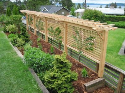 20 Awesome Tips and Ideas to Grow Grape in Your Home Backyard 11