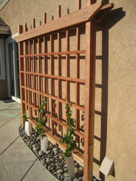 20 Awesome Tips and Ideas to Grow Grape in Your Home Backyard 13