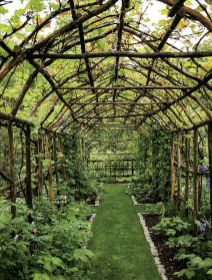 20 Awesome Tips and Ideas to Grow Grape in Your Home Backyard 6