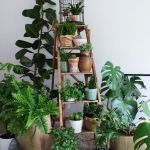 Amazing Indoor Jungle Decorations Tips and Ideas 11