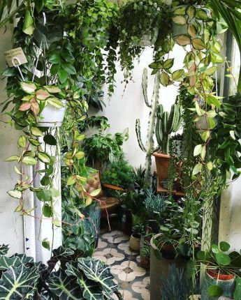 Amazing Indoor Jungle Decorations Tips and Ideas 16