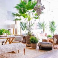 Amazing Indoor Jungle Decorations Tips and Ideas 19