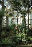 Amazing Indoor Jungle Decorations Tips and Ideas 3