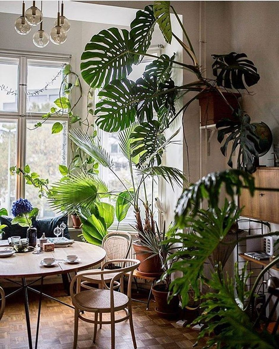 Fresh Indoor Plants Decoration Ideas For Interior Home: Amazing Indoor Jungle Decorations Tips And Ideas 4