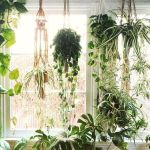 Amazing Indoor Jungle Decorations Tips and Ideas 7