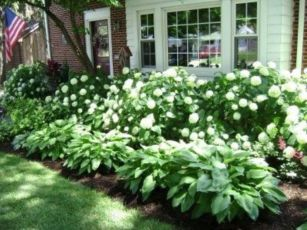 Colorful Landscaping with Low Maintenace Flower Bushes 31