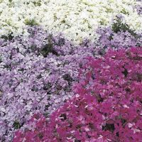 Colorful Landscaping with Low Maintenace Flower Bushes 43