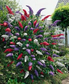 Colorful Landscaping with Low Maintenace Flower Bushes 52