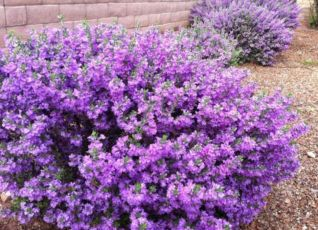 Colorful Landscaping with Low Maintenace Flower Bushes 56