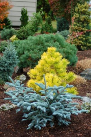 Colorful Landscaping with Low Maintenace Flower Bushes 57