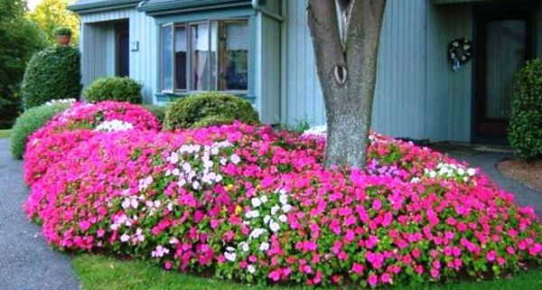 colorful landscaping ideas