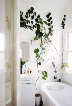 Marvelous Indoor Vines and Climbing Plants Decorations 25