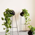 Marvelous Indoor Vines and Climbing Plants Decorations 29