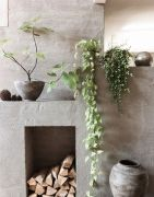 Marvelous Indoor Vines and Climbing Plants Decorations 3