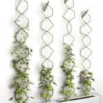 Marvelous Indoor Vines and Climbing Plants Decorations 32