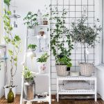 Marvelous Indoor Vines and Climbing Plants Decorations 42
