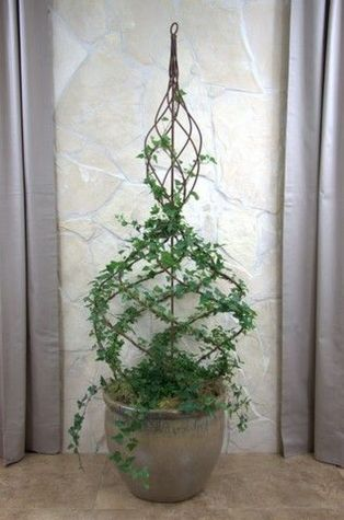 Marvelous Indoor Vines and Climbing Plants Decorations 48