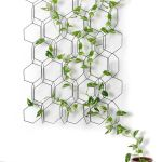 Marvelous Indoor Vines and Climbing Plants Decorations 59