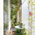 Marvelous Indoor Vines and Climbing Plants Decorations 9