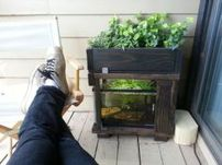 Mini Aquaponics with Fish for Home Decorations 2