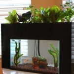 Mini Aquaponics with Fish for Home Decorations 23