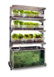 Mini Aquaponics with Fish for Home Decorations 28