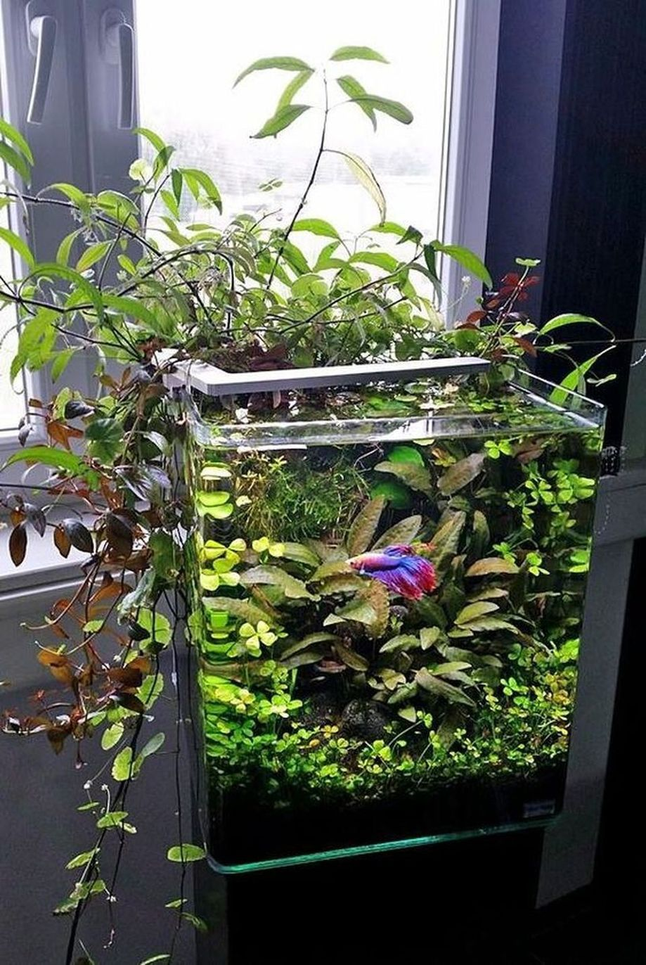 Mini Aquaponics with Fish for Home Decorations 1