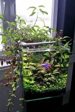 Mini Aquaponics with Fish for Home Decorations 29