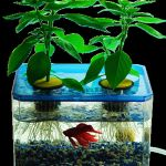 Mini Aquaponics with Fish for Home Decorations 5
