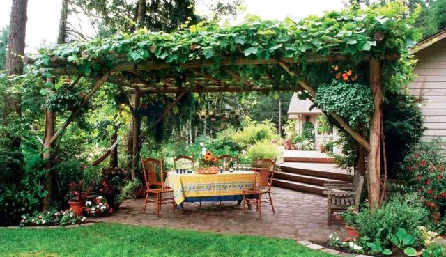 Tips to Grow Grape in Home Backyard