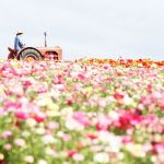 Beauty Flower Farm Which Will Make You Want to Have It 10