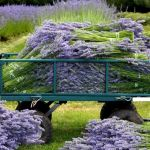 Beauty Flower Farm Which Will Make You Want to Have It 11