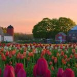 Beauty Flower Farm Which Will Make You Want to Have It 12