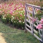 Beauty Flower Farm Which Will Make You Want to Have It 27