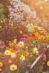 Beauty Flower Farm Which Will Make You Want to Have It 3