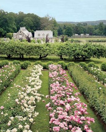 Beauty Flower Farm Which Will Make You Want to Have It 31