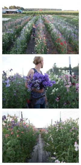 Beauty Flower Farm Which Will Make You Want to Have It 6