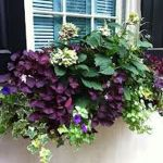 Perfect Shade Plants for Windows Boxes 12