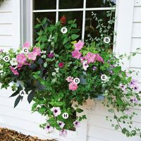 Perfect Shade Plants for Windows Boxes 13
