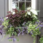 Perfect Shade Plants for Windows Boxes 17