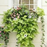 Perfect Shade Plants for Windows Boxes 32