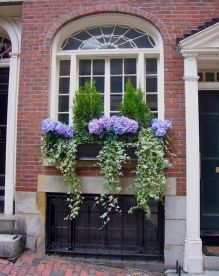 Perfect Shade Plants for Windows Boxes 34
