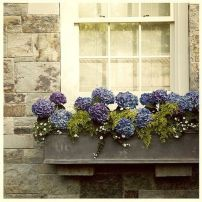 Perfect Shade Plants for Windows Boxes 39