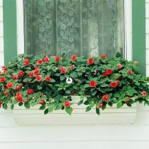 Perfect Shade Plants for Windows Boxes 50