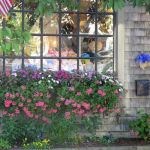 Perfect Shade Plants for Windows Boxes 51