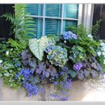 Perfect Shade Plants for Windows Boxes 54
